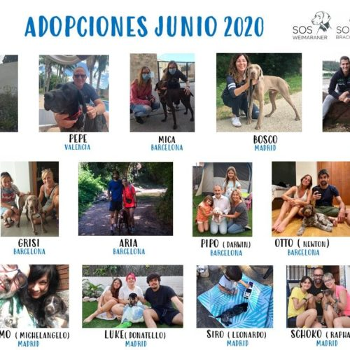 - COLLAGE JUNIO 2020.